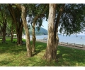 CR1818, Beach Front Condo For Rent